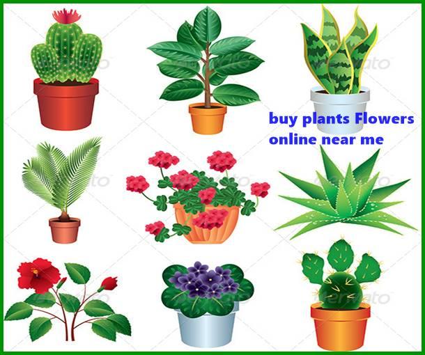 buy plants Flowers online near me