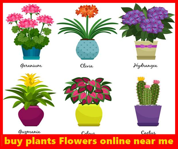 buy plants Flowers online near me