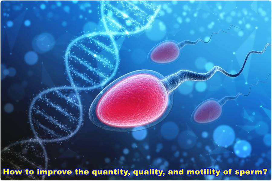 How to improve the quantity, quality, and motility of sperm?